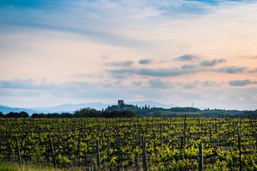 Champs de vignes en Toscane