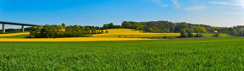 Frühlingshaftes Rapsfeld  Fotoväggar