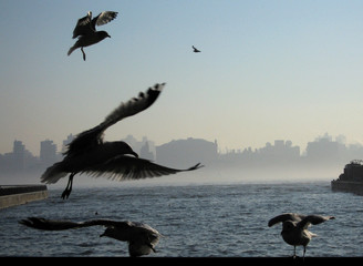 Seagulls fly past the fog shrouding Manhattan in New York as they land on a railing next to the Hudson River in Hoboken New Jersey