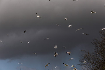 Birds Flying In Dark Clouds
