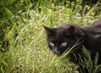 Junger schwarzer Kater in der Frühlingswiese