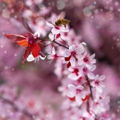 Cherry Tree Twigs. Spring Background.