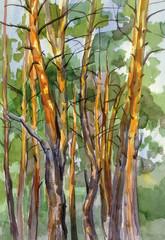 Pine forest watercolor landscape