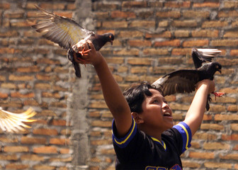 Indonesian boy plays with pigeons outside Yogyakarta in Central Java