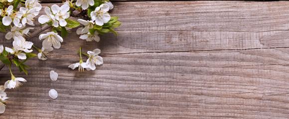 SSpring Flowers on background of old vintage blue board