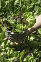 salad in a basket