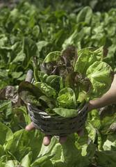 detail of salad in a basket