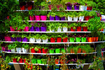 Colorful pots with different plants and flowers