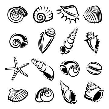 Seashells set. Vector
