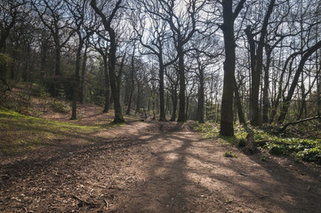 Stoneycliffe Wood Nature Reserve, near Netherton in Yorkshire,England