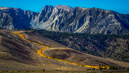 Aspens Turning Gold in the Eastern Sierra Nevada Mountains