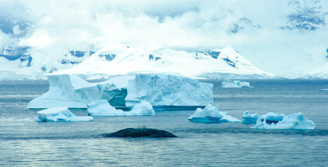 Penguins resting on a rock in Paradise bay in Antarctica are dwarfed by the size of icebergs floating by in the sea.