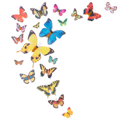 Background with colorful butterflies isolated on white background