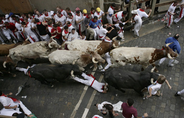 A runner falls between a pack of Miura fighting bulls and steers during the second day of the running of the bulls at the San Fermin festival in Pamplona
