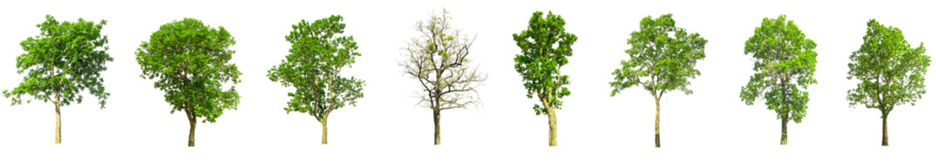 trees isolated on white background, tree collections isolated, tree objects