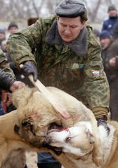 RUSSIAN OWNER TRIES UNLOCK JAWS DURING DOG FIGHTS NEAR KRASNOYA SLOBODA.
