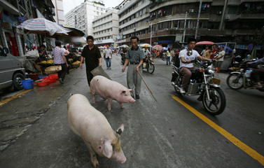 Pigs are walked on a street by vendors after their market was flooded  in the township of Fengkai in the southern Chinese province of Guangdong
