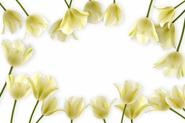 frame from white tulips