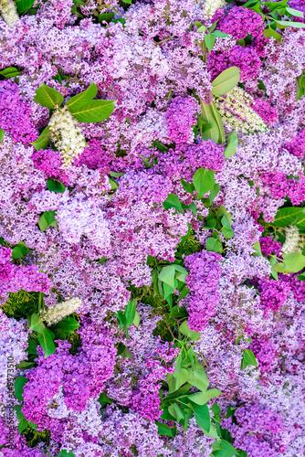 Dekoration F R Eine Hochzeit Flieder Blumen Wand