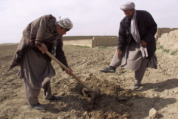 HAJI NAVI EXPLAINS AS A VILLAGER DIGS UP A SHOE AND LEG BONES INMAZAR-I-SHARIF.