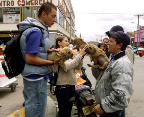 COLOMBIAN STREET VENDOR SELLS PUPPY IN BOGOTA.