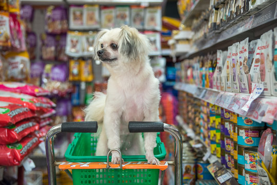 Dog so cute wait a pet owner at pet shop