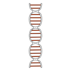 color silhouette image front view dna molecule vector illustration