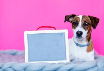 jack russel terrier with blackboard