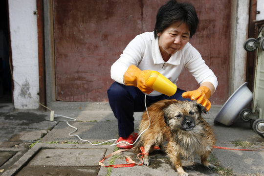 Woman dries her dog's fur with hairdryer outside her house in downtown Shanghai