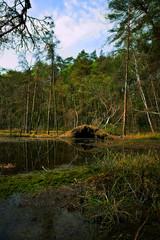 Spring, wetland, pond and forest, overturned trees, landscape