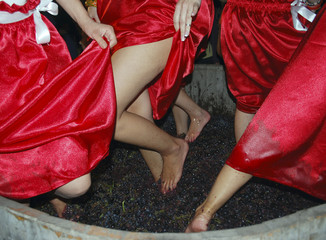 Women crush grapes with their feet during a wine festival in Berat