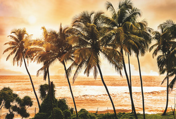 Palm trees at sunset light. Goa. India vintage style photo. Instagram filter.Serenity tropical beach.