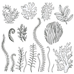 set hand-drawn doodle algae. Vector isolated on white