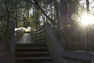 Wooden Stairway in Florida Summer Woods at Sunset