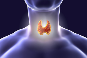 Thyroid gland inside human body. 3D illustration