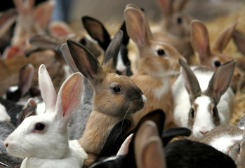 Rabbits look at passers-by as they are put on a sale at a market in Alexandria some 220 km (137 mile..