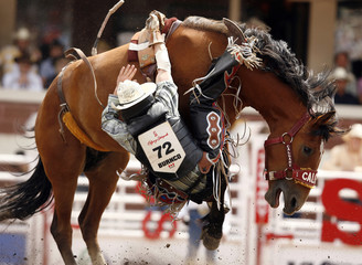 Herring tries to hang onto horse Precious Jewel in novice bareback event at Calgary Stampede rodeo in Calgary