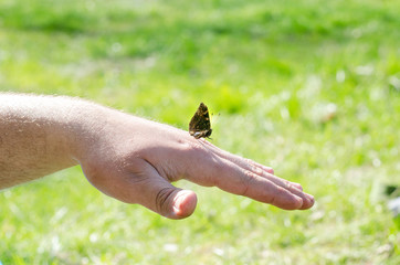 A butterfly sits on the hand of a man or an adult man on a background of green nature