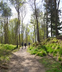 A walk in the woods of Scotland on a spring morning