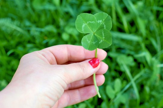 Four leaf clover in womans hand, symbol of good luck
