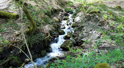 Stepped mountain stream in spring forest.