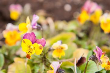 Fresh flower on the ground.