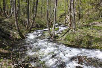 Winding mountain stream among trees and grass in spring.