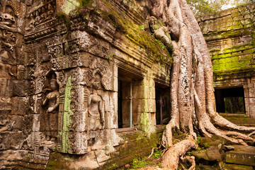 Ta Prohm temple. Ancient Khmer architecture under the giant roots of a Spung tree at Angkor Wat complex, Siem Reap, Cambodia. Fototapete