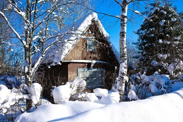 house in forest.winter. berries sun
