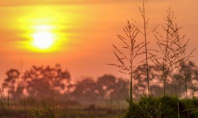 wonderful dramatic scene. fantastic sunrise over the meadow