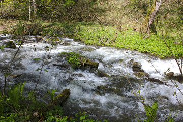 Stormy mountain stream with white foam among trees and grass in spring.