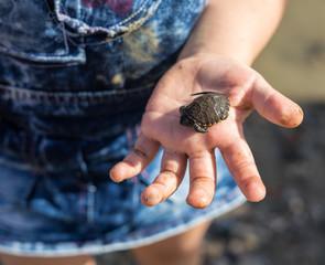 Hand of small girl holding cute newborn baby turtle