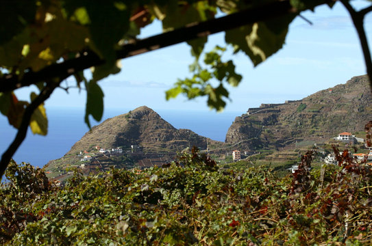 -PHOTO TAKEN 13OCT04- General view shows vineyards used for production of Madeira wines in the Estre..