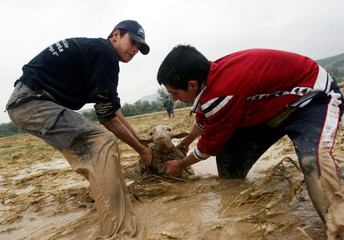 Two men try to help a sheep trapped in mud in Cuevas Bajas, southern Spain May 3, 2006. Unusually he..